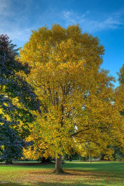 Beautiful Fall colors, in May?!?! @ Christchurch Botanic Gardens