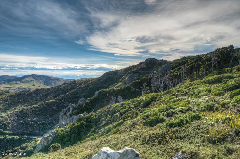 Beautiful scenery on the Otepatotu Scenic Reserve trail.