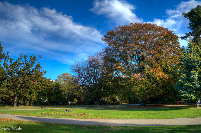 Beautiful park area in the Christchurch Botanic Gardens