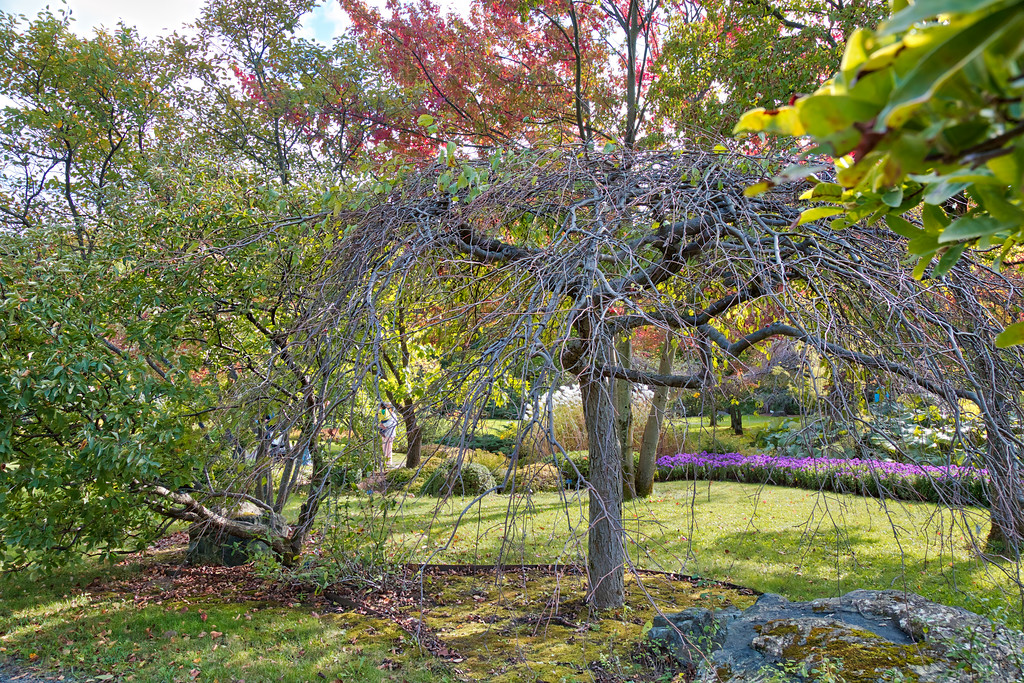 Botanic Garden Tree HDR