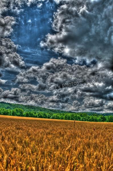 Wheat Field (South)