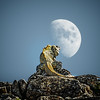 Moon gazing - Mexico