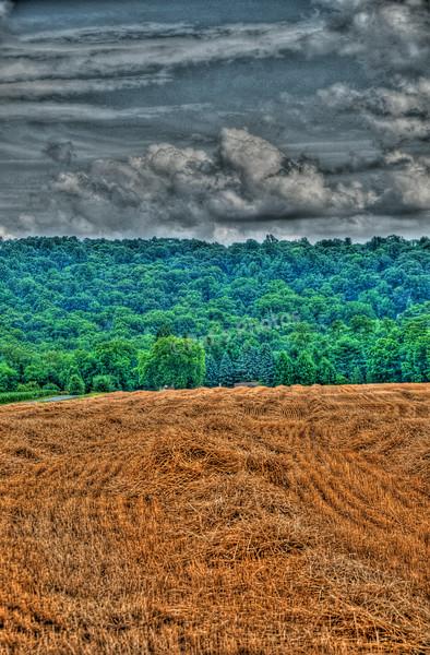 Freshley Cut Wheat Field