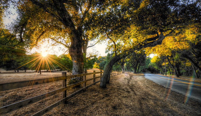 gilded light | portola valley