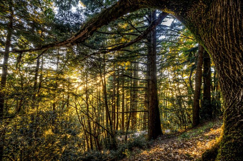 pardon my reach | woodside