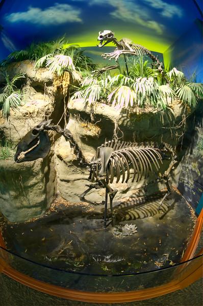 South Florida Museum