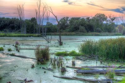 Grassy Marsh