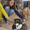 A girl pets a bunny.
