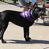 A dog available for adoption enjoys the sun.