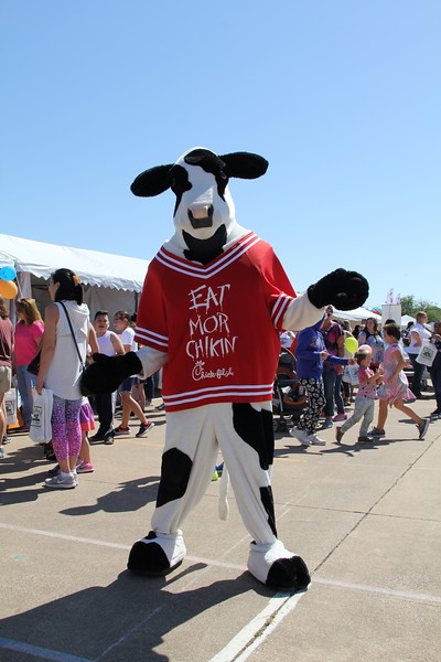 The Chick-fil-a cow poses for a picture.