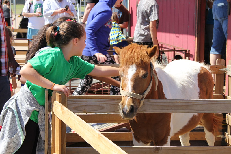 A girl pets a horse at a petting zoo.