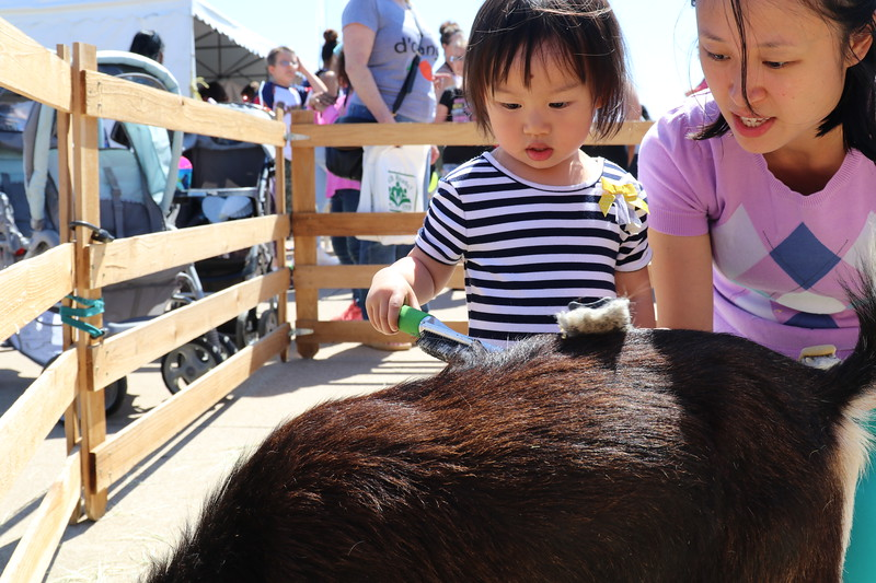 A girl and her mom play with an animal at the petting zoo.