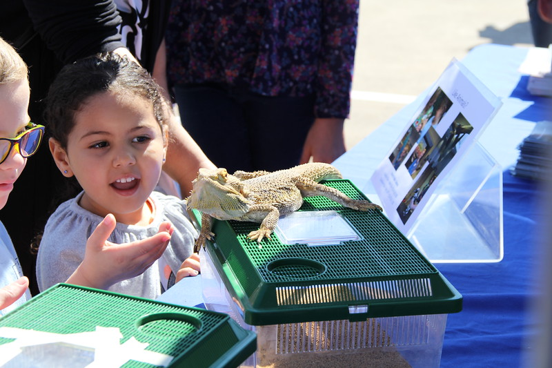 Children interact with a lizard.