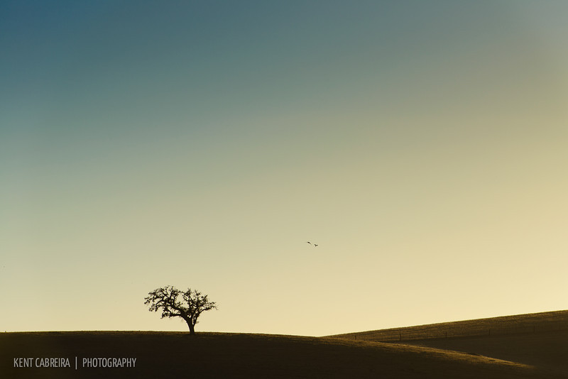 <i>Solitary</i> — Hollister Hills of San Benito County, CA