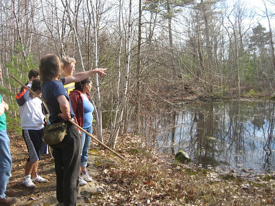 Here is the vernal pool, a fertile wetland area that is only temporary. It dries out in summer, and refills each spring.  Many species of animals depend on these seasonal vernal pools.