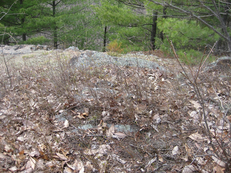 Near our noisy group photo-taking, another black snake slept in the sun, almost unnoticed.  Can you spot him?