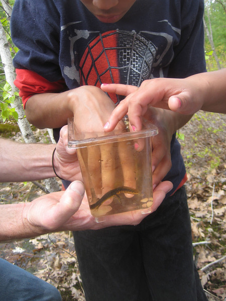 Letting the salamander swim by, touching our fingers, was exciting.