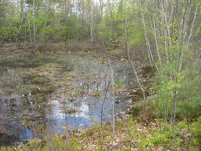 Vernal pool  -- a seasonal puddle of water in which much wildlife thrives
