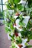 HFWBH Greenhouse
