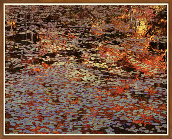 Lily Pond With Reflections
