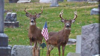 Happy Memorial Day from Arkansas Big Buck Classic