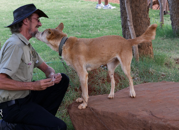 Graeme (our bus driver and guide) was very familiar with this chained dingo and a kiss shows it