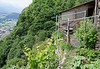 La Sognata, garden and work shed