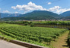 Marano, Azienda Agricola de Tarczal; vineyards and countryside