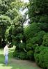 Valeggio, Parco Sigurta Giardino; Roy inspecting centuries-old boxwoods
