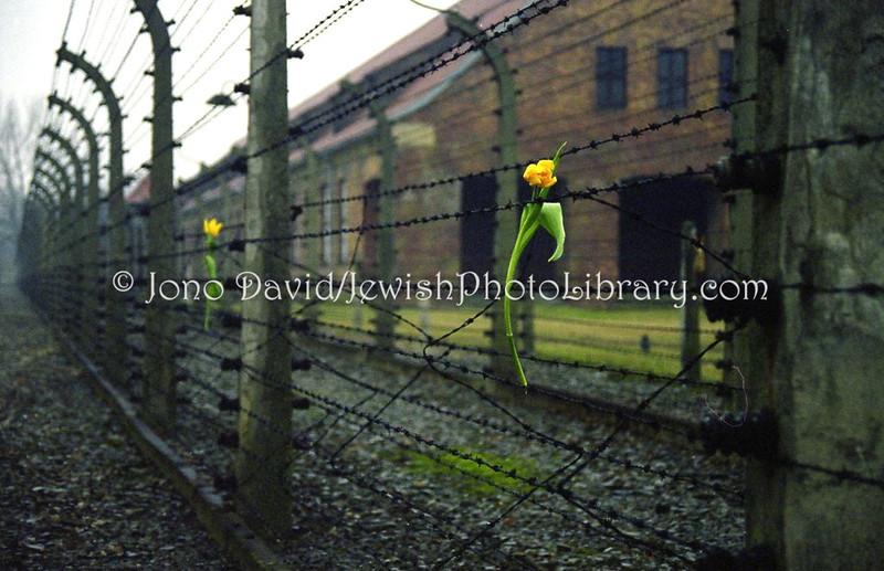 Auschwitz  Oswiecim, POLAND