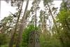 LV 1577  Bikernieki Forest Memorial  RIGA, LATVIA