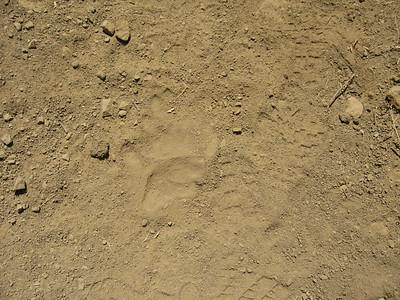Reyes Creek Trail (incomplete) - difabu