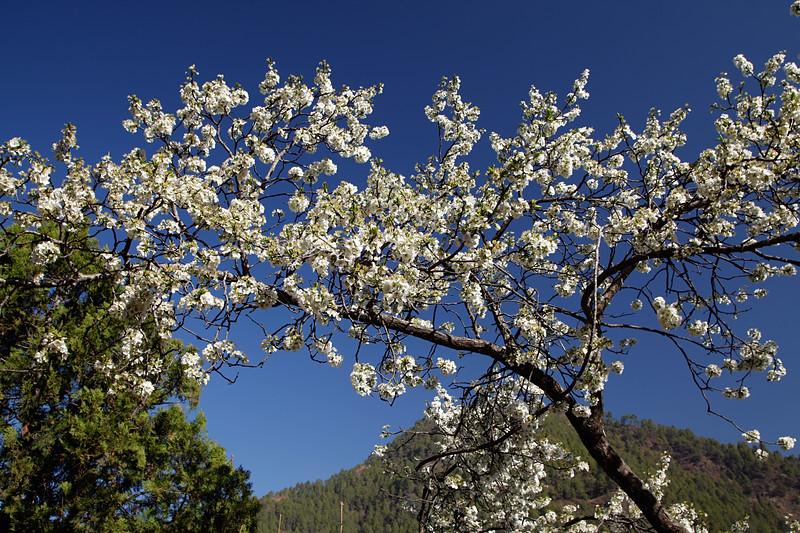 Himalayan Spring / Гималайская весна