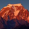 A Himalayan Lotus / Гималайский лотос