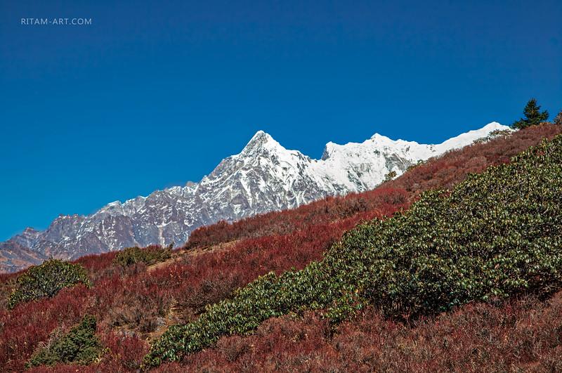 Гималайские луга / Himalayan grasslands