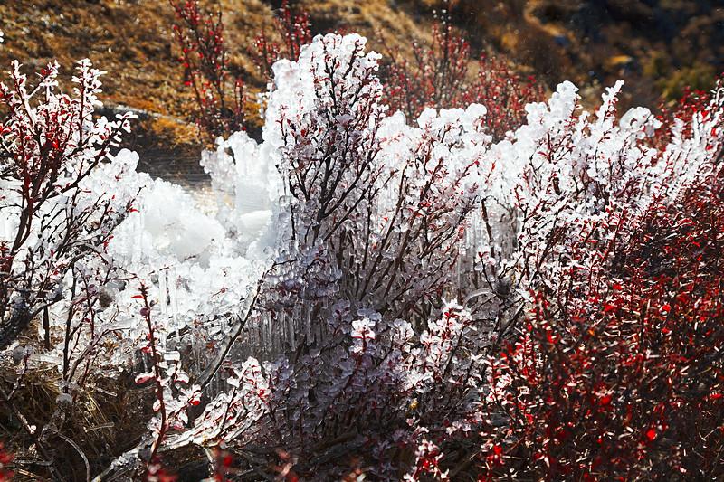 Himalayan Icy Corals / Гималайские ледяные кораллы