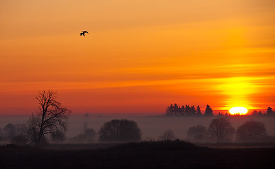 Misty morning with geese