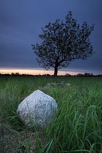 Rock&Tree