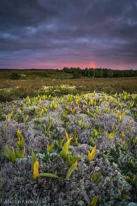 Estonian tundra