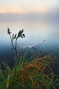 Soft-blowing spiderweb
