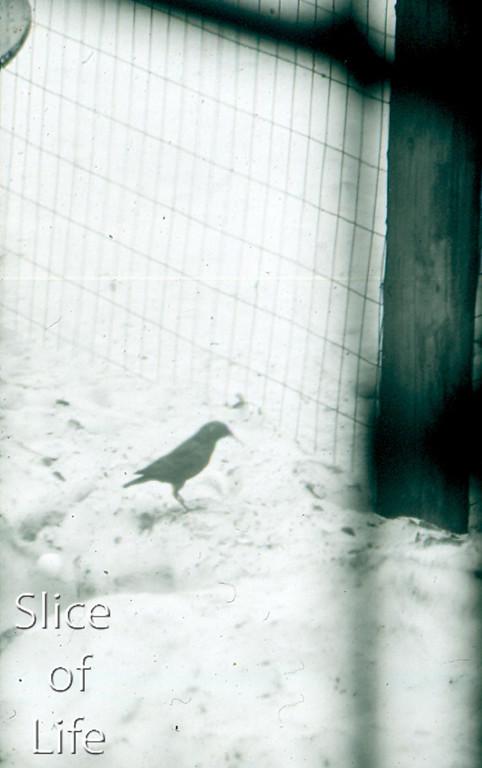 Slice of Life Volume 17