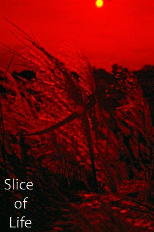 Slice of Life Volume 25
