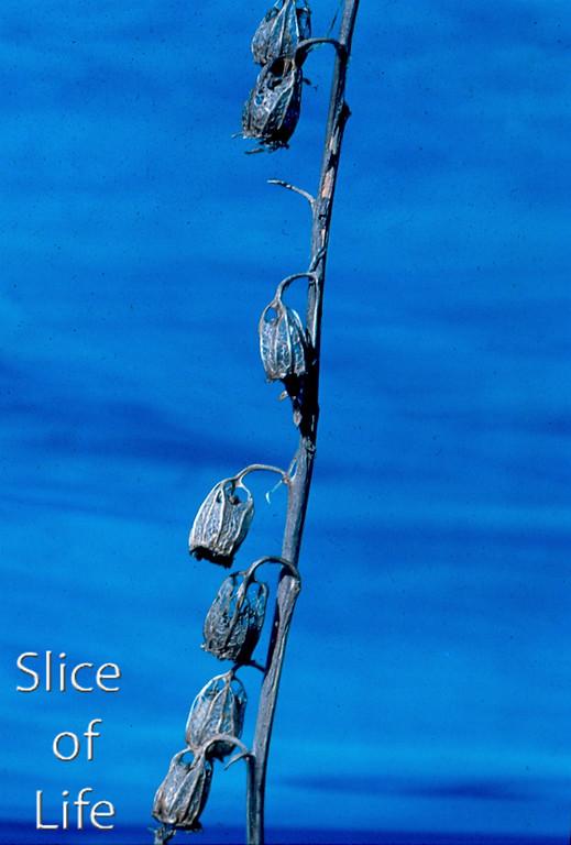 Slice of Life Volume 20