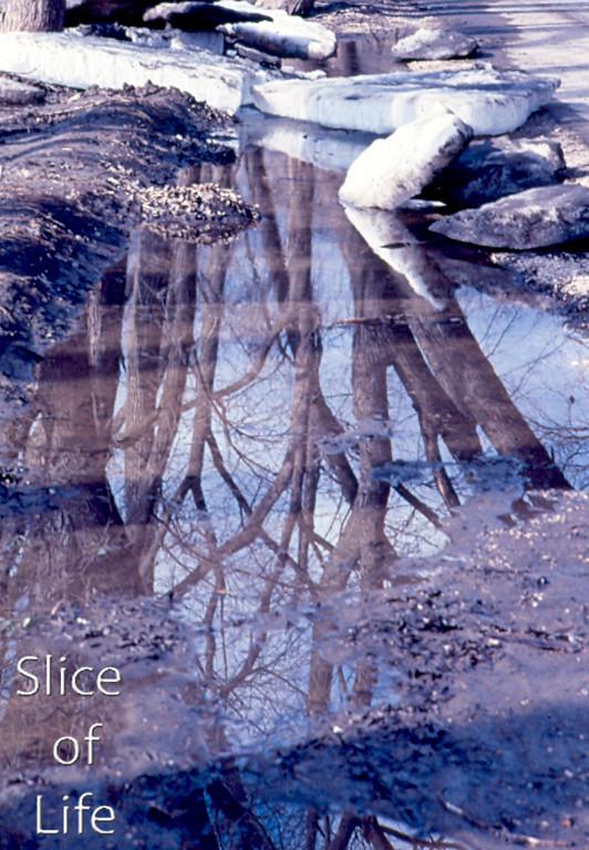 Slice of Life Volume 21