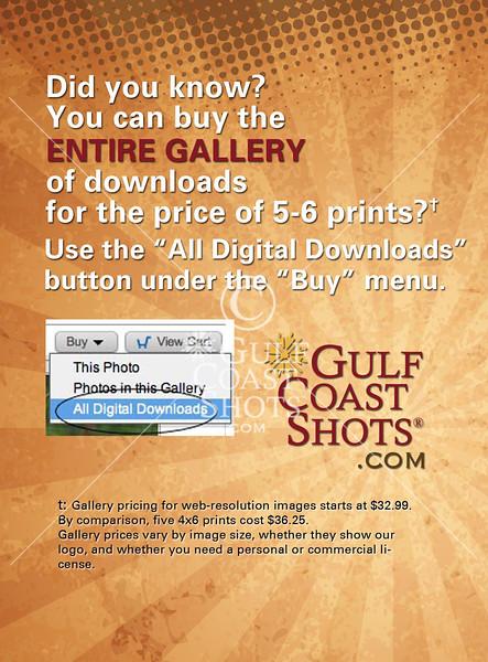 Buy all digital downloads