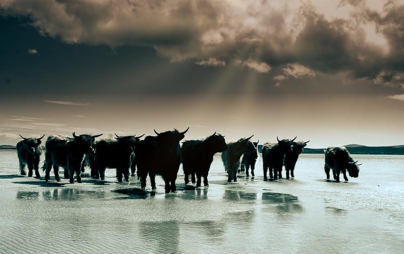 The highland Gathering