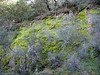The constant rains of the last month or so have nourished the mosses that were in vivid green on the rocks, all along the trail