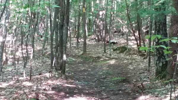 Nice trails here