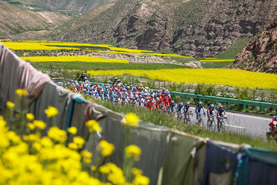 Tour of Qinghai lake, China