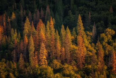 Memorial Day Weekend At Yosemite National Park